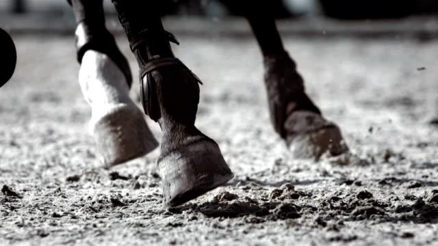 HD Super Slow-Mo: Horse Kicking Sand While Running