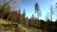 Super Zeitlupe, HD: Logger Schneiden einen Baum