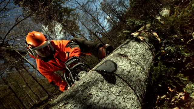 HD Super Slow-Mo: Logger Cutting Tree Into Sections
