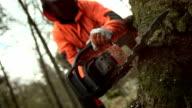 Super Zeitlupe, HD: Sägemehl Flying und Schneiden einen Baum