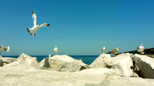 HD Super Slow-Mo: Seagulls Flying On Rocks