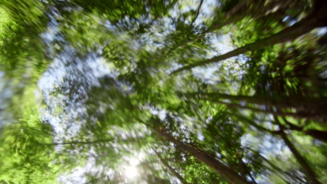 Surreal POV from underwater at the sun through forest trees
