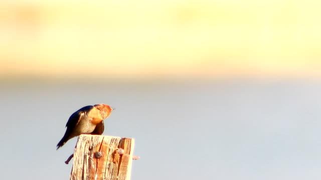slikken van vogel