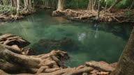 swamp forest 1080p