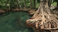 swamp forest