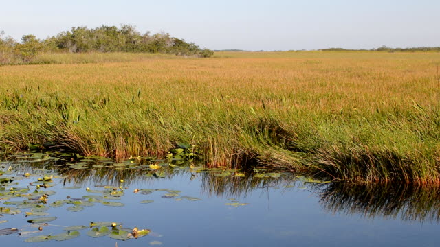 Swamp in the Everglades, Florida, USA