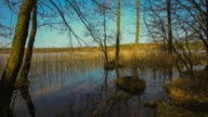 Swamp lake with moving sunbeam - flowing duck