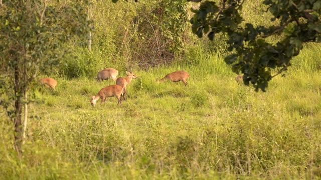 swarm of deer Essen