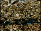 Swarm of Monarch butterflies cluster around stream, Mexico