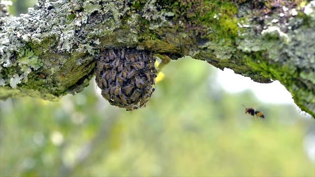 Swarming bee in the garden