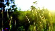 Gras und Sonne (Endlos wiederholbar)