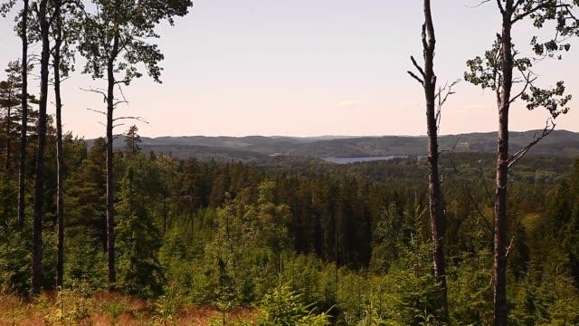 Sweden, Forest