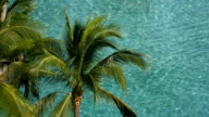 Swimming pool  and coconut tree