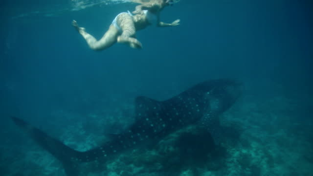 Swimming with a whale shark!