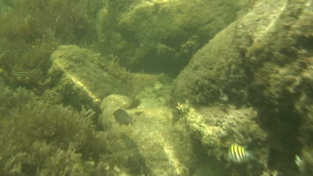 Swimming with the fish 2 - HD 60i