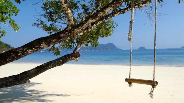 swing hang on big tree over beach sea