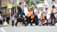 Sydney Crossing Crowds