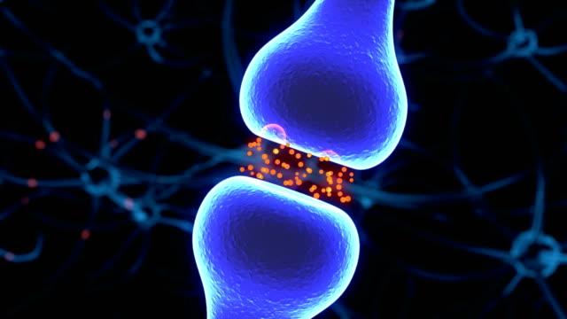 Synapse und Neuron Signale