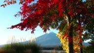 M't Fuji and autumn leaves