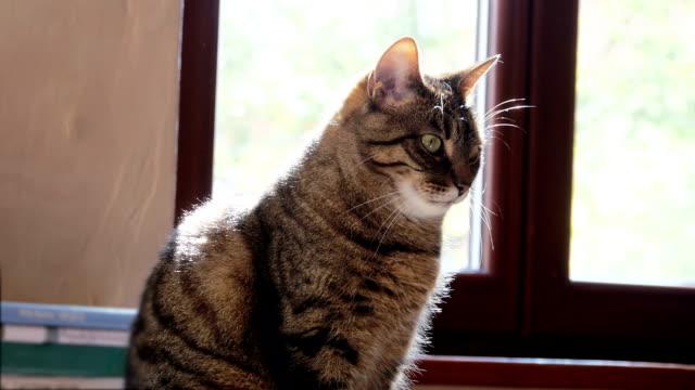 Tabby cat sitting in the sun