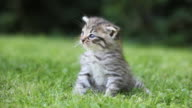 Tabby kitten sitting on grass