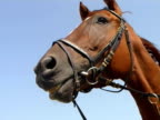 'talking' Horse