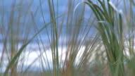 Tall Breezy Grass + Audio