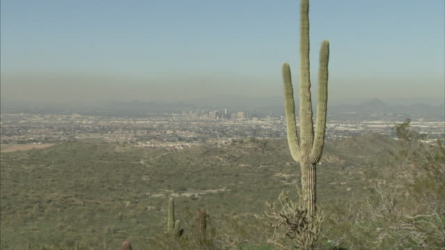 Tall cactus plant of frame on hill hills in distance lower frame BG Phoenix cityscape in distant BG