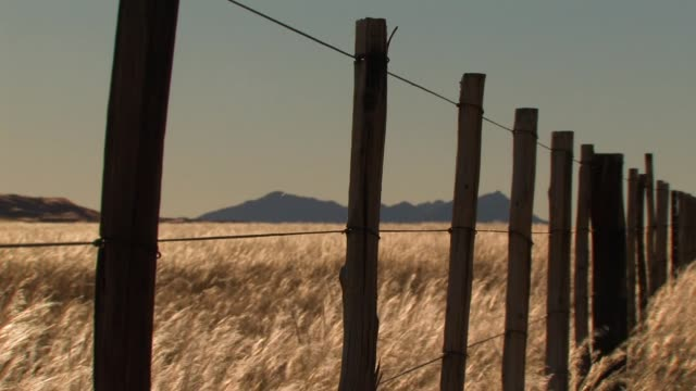 Tall grass blows in a fenced field near mountains in Namibia. Available in HD.