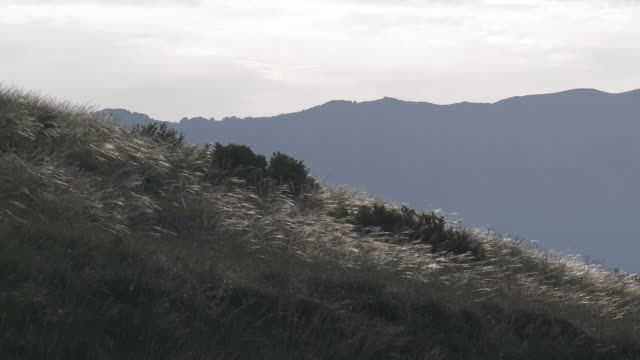 MS Tall grass swaying on breeze in Gran Sasso National Park / Calascio, Abruzzo, Italie