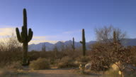 Tall Saguraro cactus with sage brush and colorful desert sky