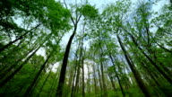 Tall stems of woods nature background