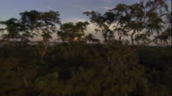 Tall trees tower over a Madagascan forest. Available in HD.