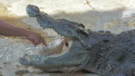 Tamers take money from inside the crocodile's mouth during a presentation