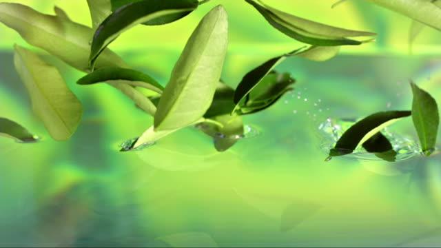 Tea Leaves Falling In Water (Super Slow Motion)