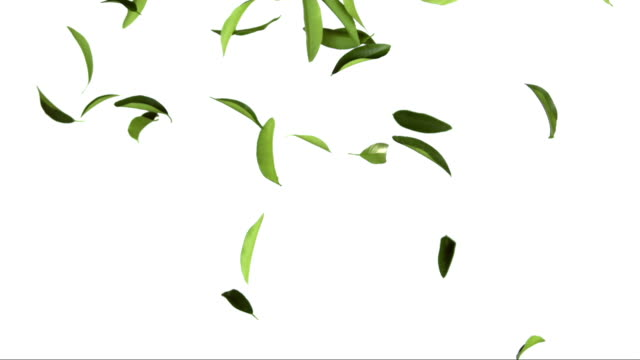 Tea Leaves On White Background (Super Slow Motion)