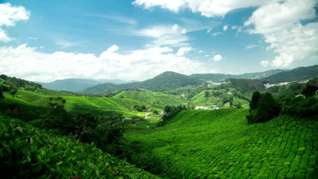 Teeplantage in Hochland Cameron Highlands Pahang, Malaysia