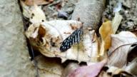 Teamwork von Ameisen Schmetterlingsflügel auf dem Stamm-Baum tragen dazu
