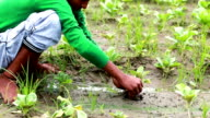 Teenager boy sowing plant in the field