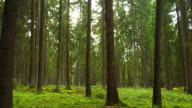 PAN Temperate Coniferous Forest In The Early Spring