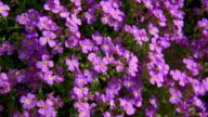 HD DOLLY: Temperate Flowers