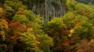 Tenninkyou  autumn leaves  columnar joint