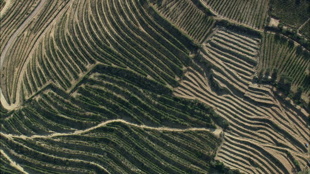 AERIAL WS Terraced fields / Vila Real, Portugal