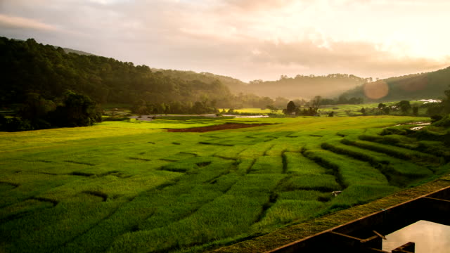 Terraced Paddy Field.
