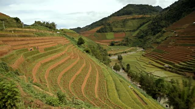 terraced rice field in Mu Chang Chai, Vietnam