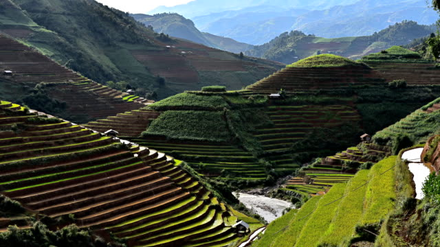 terraced rice field in Mu Chang Chai, Vietnam
