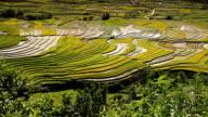 terraced rice field in Tule Village