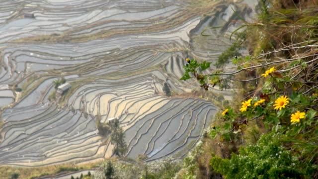 terraced rice field Yuanyang, China