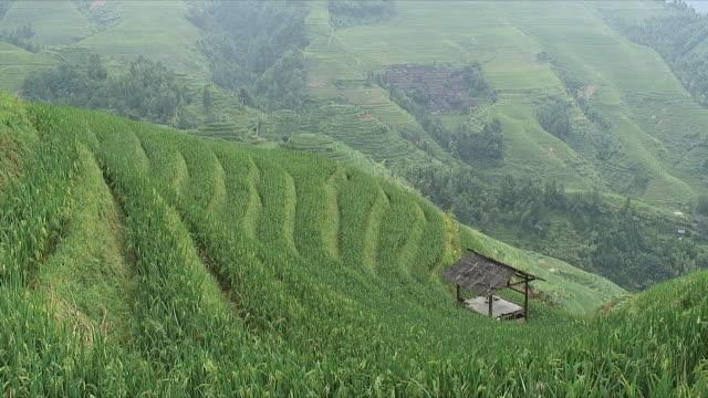WS HA Terraced rice fields, Longsheng, Guangxi, China