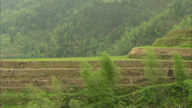 WS Terraced rice fields on hillside, Guilin, Guangxi Zhuang Autonomous Region, China
